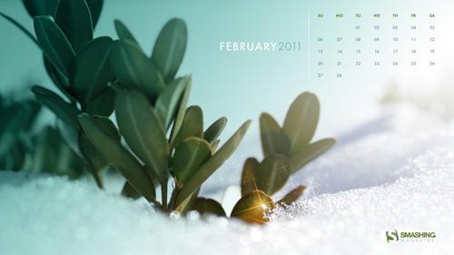 february-11-winter_shrub__88-calendar-1920x1080
