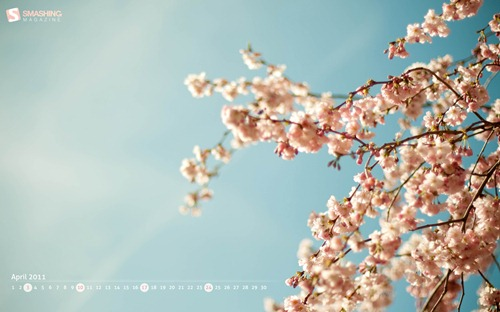 april-11-prunus__48-calendar-1920x1200