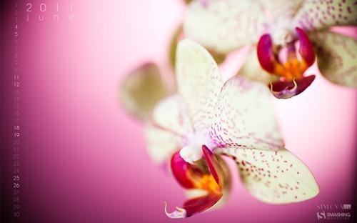 june-11-orchid__75-calendar-1920x1200