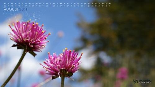 august-11-pink_flowers__73-calendar-1920x1080