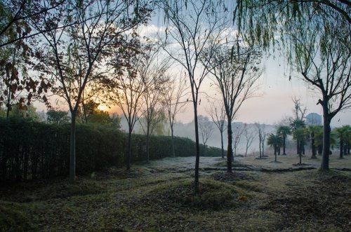 Sunrise over the Grove