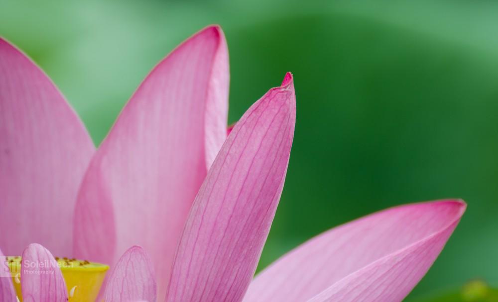 Lotus-20